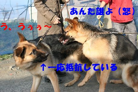 IMG_6961.jpg