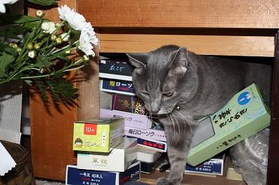 罰当たり猫