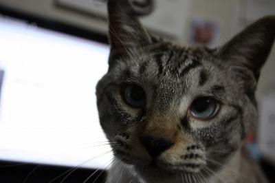 猫とピアス10