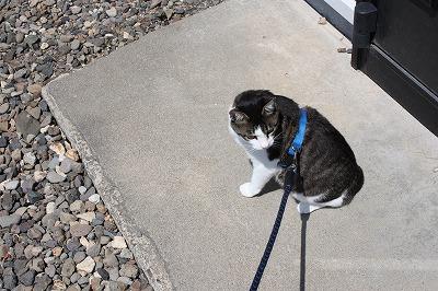 ジャンの散歩1