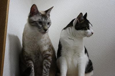 猫シンクロ1