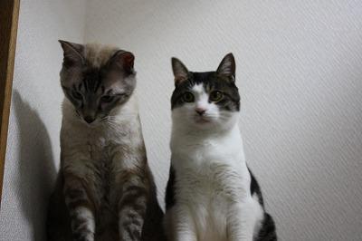 猫シンクロ3