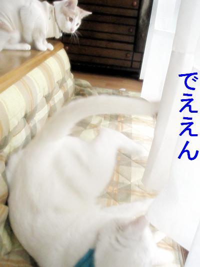 200901036.jpg