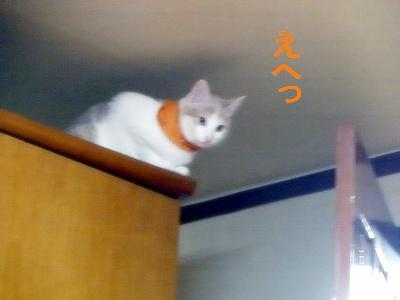 2009011141.jpg