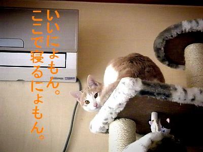 20090119010.jpg
