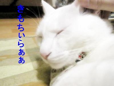 2009020103.jpg