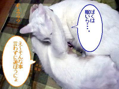 2009020108.jpg
