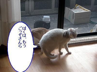 20090208014.jpg