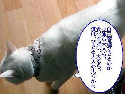 20090208016.jpg