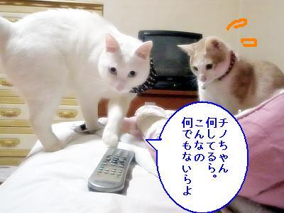 20090410006.jpg