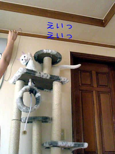 20090603006.jpg