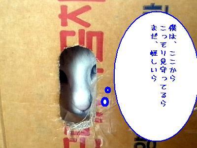 20090625009.jpg
