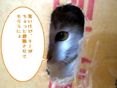 20090625010.jpg