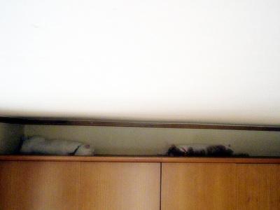 20090727004.jpg