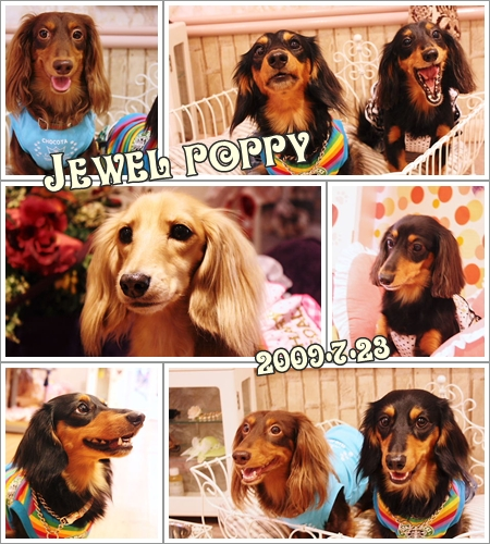 Jewel poppy☆
