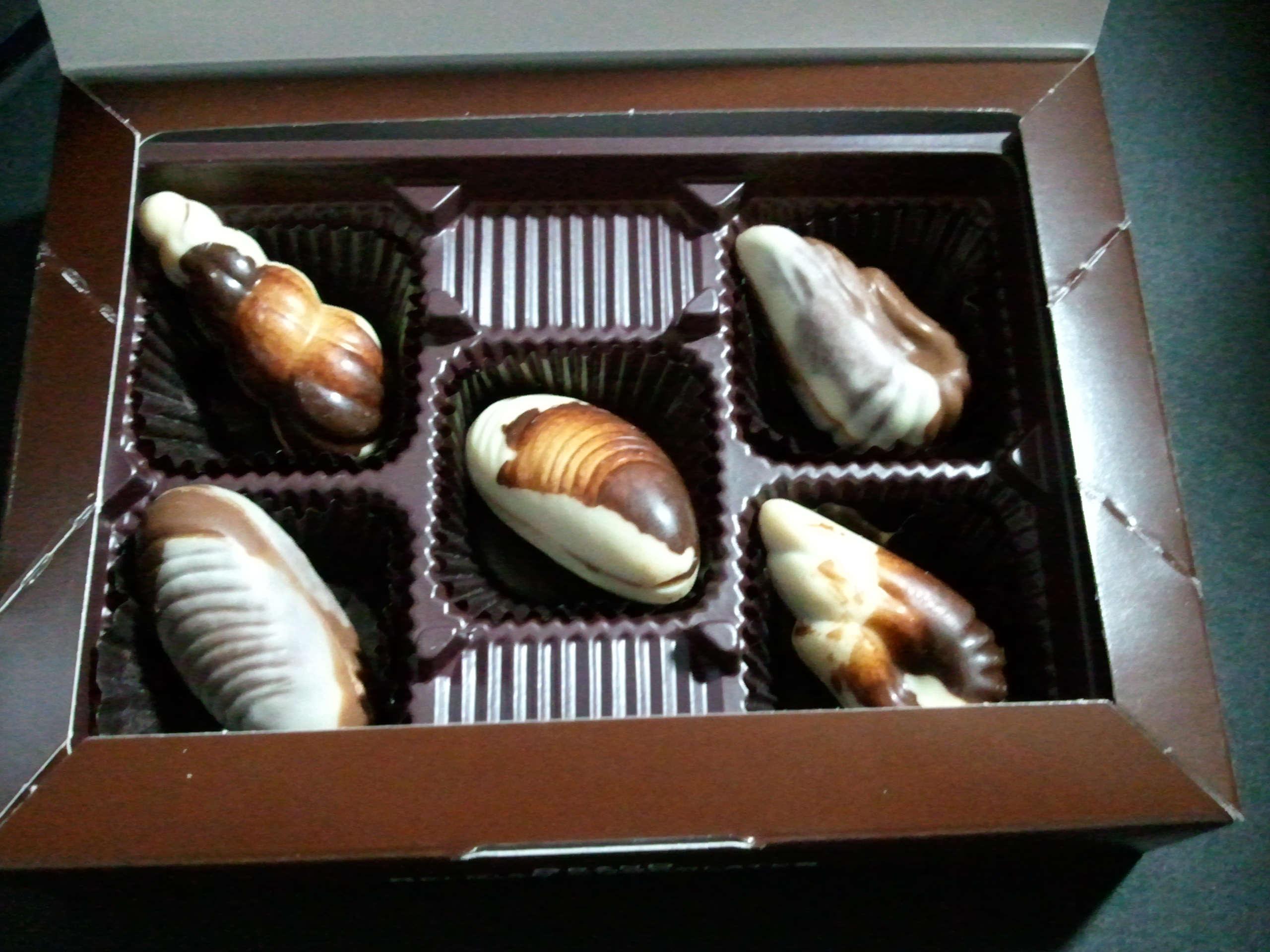 貝殻チョコ