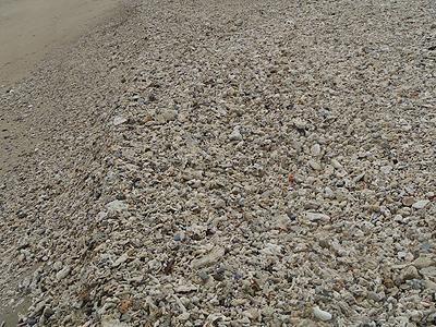 辺土名の浜