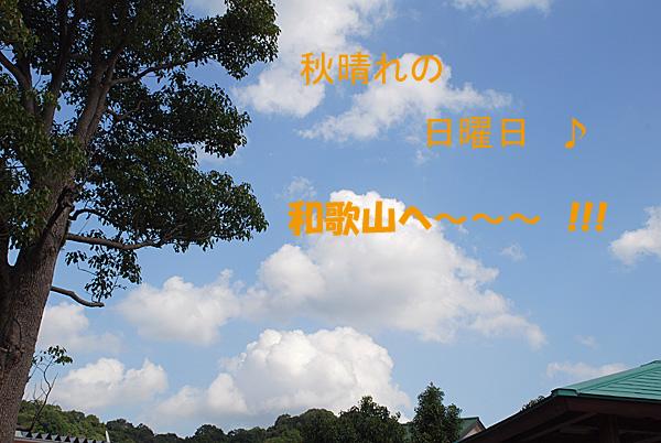 DSC_6449.jpg