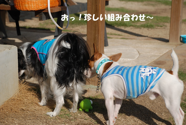 DSC_6605.jpg