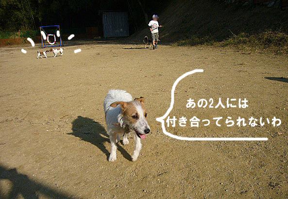 P1070340a.jpg