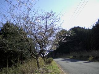 SA3A0003.jpg