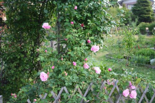 2007_0530_052613AA.jpg