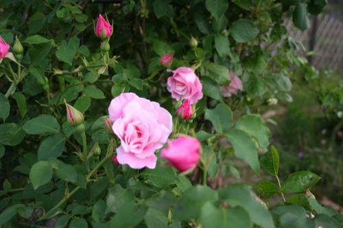 2007_0530_052626AA.jpg