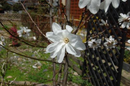 2008_0415_125415AA.jpg