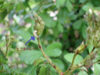 DSC02605s.jpg
