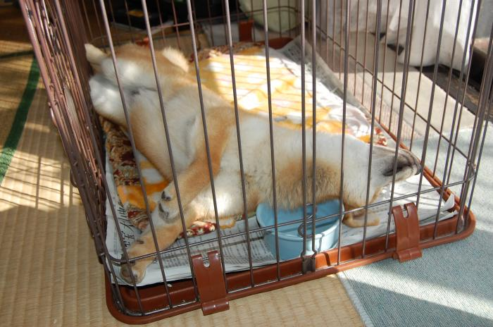 4_20090228210516.jpg