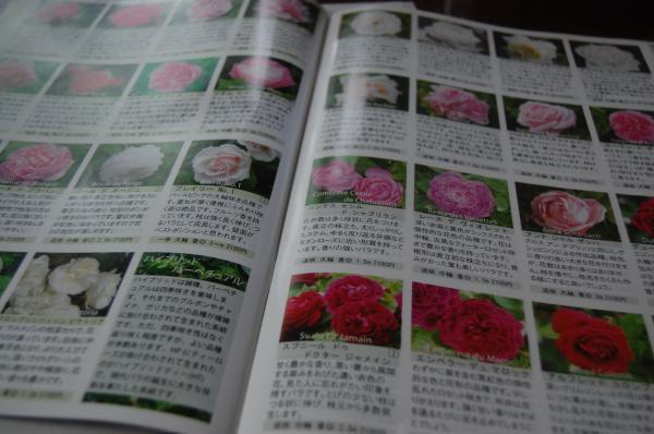 4_20090513075909.jpg