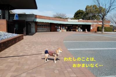 DSC_0007_20110307222422.jpg