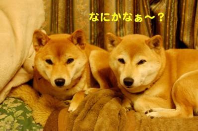 DSC_0027_20110405025330.jpg