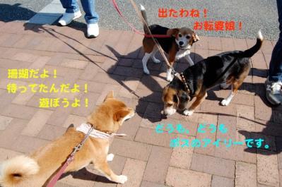 DSC_0028_20110307224651.jpg