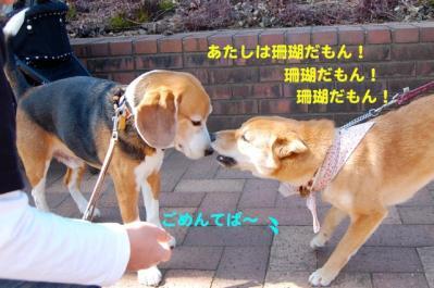 DSC_0031_20110307224627.jpg