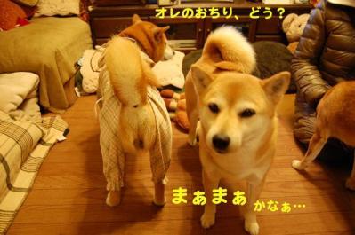 DSC_0105_20110322212913.jpg