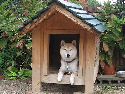犬小屋に入ってます