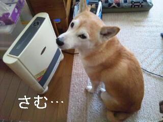 DVC00002_20111216192332.jpg