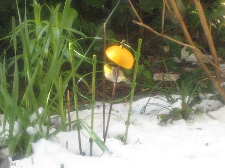 雪の日の猫又ひな祭りめじろ篇 001