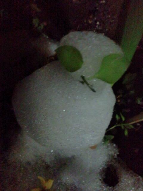 猫又雪祭り 002