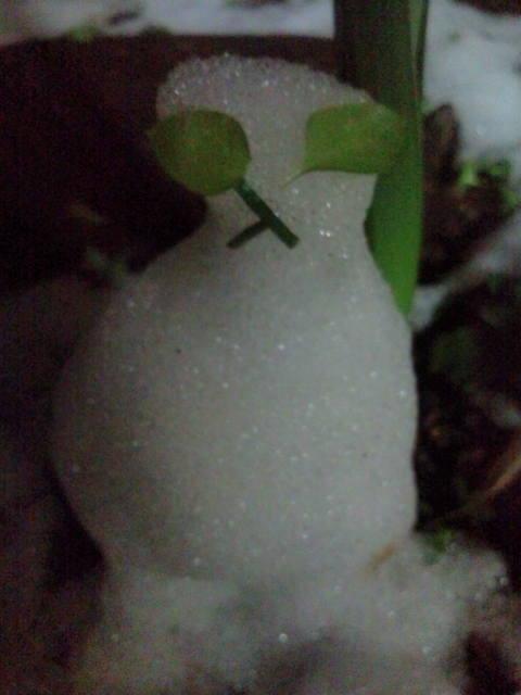 雪猫まつり 029