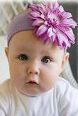 lavender_daisy.jpg