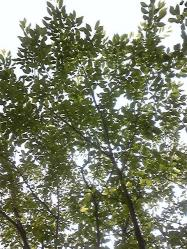 吉野公園でお昼寝