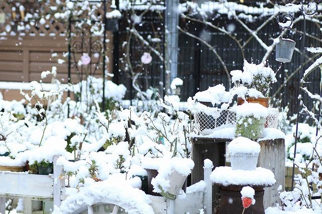 IMG_6076雪景色