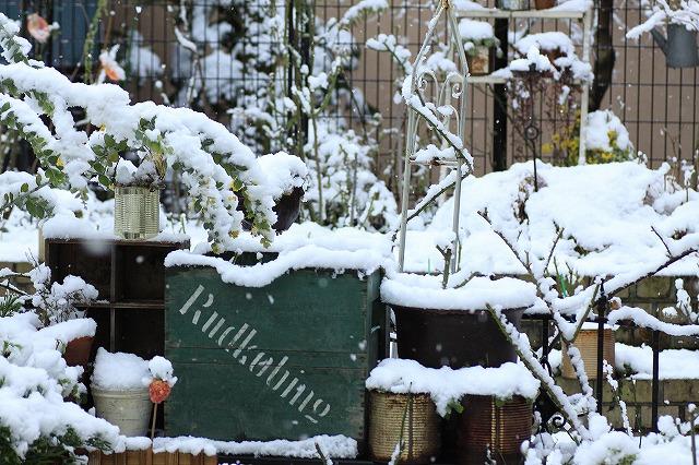 IMG_6079雪景色