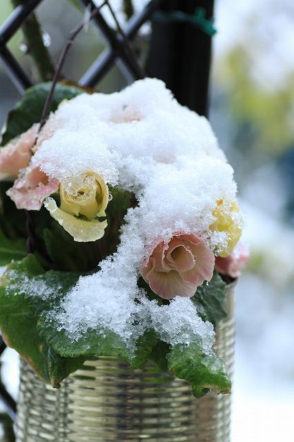 IMG_6086雪景色