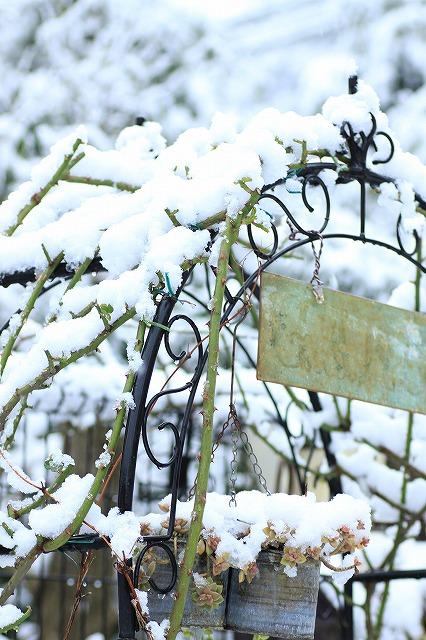 IMG_6096雪景色