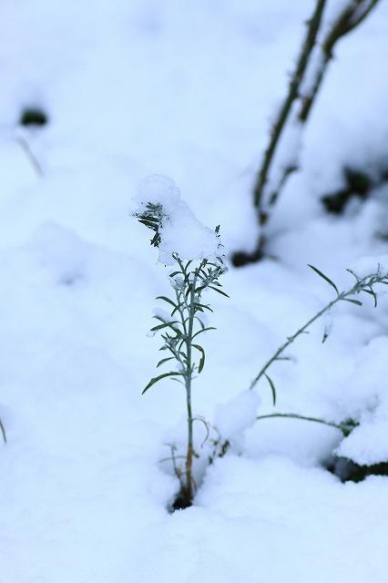 IMG_6098雪景色