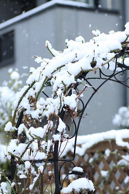 IMG_6101雪景色