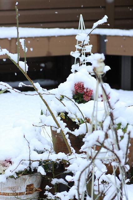IMG_6102雪景色